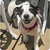 Adopt A Pet :: Barbie - Afton, TN