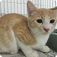 Adopt A Pet :: Cinnamon - Chesapeake, VA