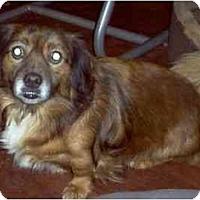 Adopt A Pet :: Brew - Albany, NY
