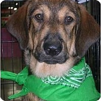 Adopt A Pet :: Samson - Glastonbury, CT