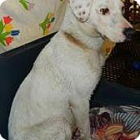 Adopt A Pet :: Lynn - Largo, FL