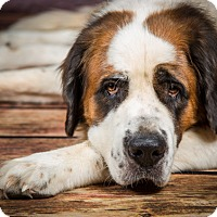 Adopt A Pet :: KIMBO - Glendale, AZ