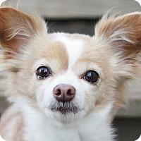 Adopt A Pet :: Baby Girl (Bonded w/Princess) - Romeoville, IL