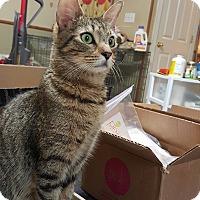 Adopt A Pet :: Mia - McDonough, GA