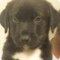 Adopt A Pet :: Hunter - Groton, MA
