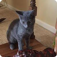 Adopt A Pet :: Kerry - Sedalia, MO