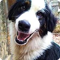 Adopt A Pet :: Panda - Manhasset, NY