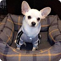 Adopt A Pet :: Parker - Yuba City, CA