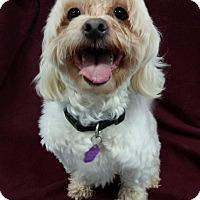 Adopt A Pet :: Benson - Urbana, OH