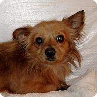 Adopt A Pet :: FINNIAN - Albany, NY