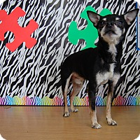 Adopt A Pet :: Jenkins - North Judson, IN