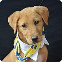 Adopt A Pet :: John Schneider - Plano, TX