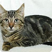 Adopt A Pet :: Mascot - New York, NY