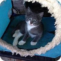 Adopt A Pet :: Tiki - Winter Haven, FL