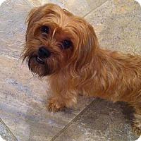 Adopt A Pet :: Gee Gee - Hamilton, ON