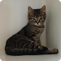 Adopt A Pet :: Barbara - Hamilton, ON