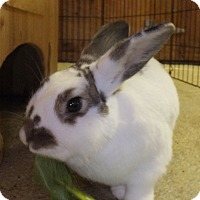 Adopt A Pet :: Ollie and LuLu - Foster, RI