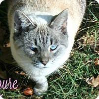 Adopt A Pet :: Azure. **PENDING ADOPTION** - Columbia, TN