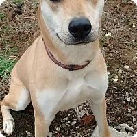 Adopt A Pet :: CINNAMON - Georgetown, KY
