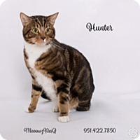 Adopt A Pet :: Hunter - Riverside, CA