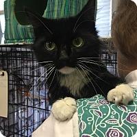 Adopt A Pet :: Begonia - Lunenburg, MA