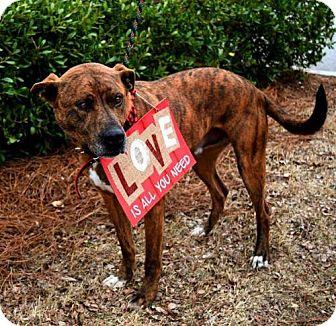 Plott Hound Mix Dog for adoption in Chatham, Virginia - Dingo
