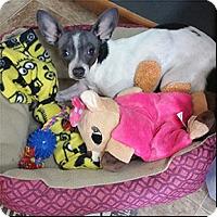Adopt A Pet :: Paris - Shreveport, LA