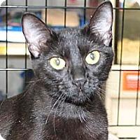 Adopt A Pet :: Mistic - Modesto, CA