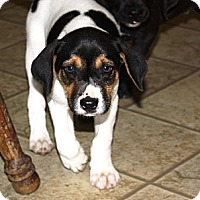 Adopt A Pet :: Eric - in Maine - kennebunkport, ME