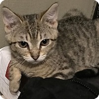 Adopt A Pet :: Star - Barrington, NJ
