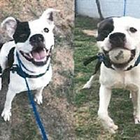 Adopt A Pet :: Aries - Winnsboro, SC