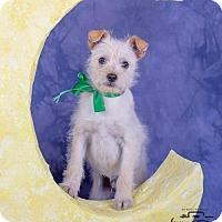 Adopt A Pet :: Doogie - Colorado Springs, CO