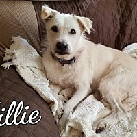 Adopt A Pet :: Tillie - Mobile, AL