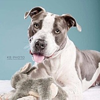 Adopt A Pet :: Bruno - Homewood, AL