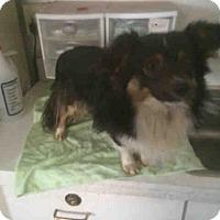 Adopt A Pet :: A069593 - San Martin, CA