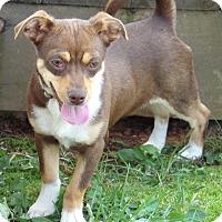 Adopt A Pet :: Magnolia (8 lb) Video! - Burlington, VT