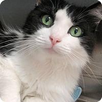 Adopt A Pet :: Magic - Lunenburg, MA