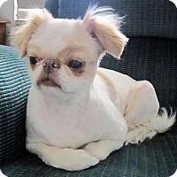 Adopt A Pet :: Chinnie - Aurora, CO