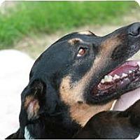 Adopt A Pet :: *Sparky - Winder, GA
