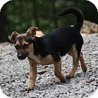 Adopt A Pet :: Paul -($50 off!) - Staunton, VA