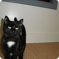 Adopt A Pet :: Bridget - Milwaukee, WI