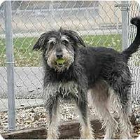 Adopt A Pet :: Tasha - Meridian, ID