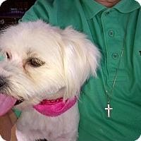 Adopt A Pet :: Lacey - Covina, CA
