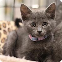 Adopt A Pet :: Kate - Sacramento, CA