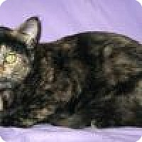 Adopt A Pet :: Kricket - Powell, OH