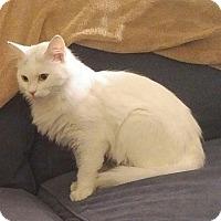 Adopt A Pet :: Snow - Fairborn, OH