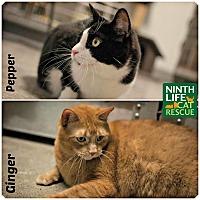 Adopt A Pet :: Ginger & Pepper - Oakville, ON