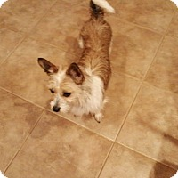 Adopt A Pet :: Pixie - Wrightsville, PA