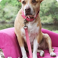 Adopt A Pet :: Ruffles - Jacksonville, FL