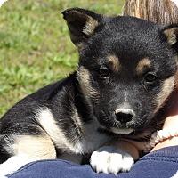 Adopt A Pet :: Pixie (6 lb) Video - Sussex, NJ